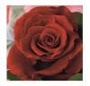 Herlitz salvrätikud 33x33/20 Red Rose